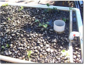 "ABOVE:- 3 September 2006 Lettuce, Silver Beet, Zucchini and Tomatos planted. Gravel is ""10mm Drainage Gravel"""