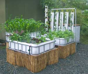 CHOP Mark2 system built from recycled IBC's Murray Hallam Practical Aquaponics