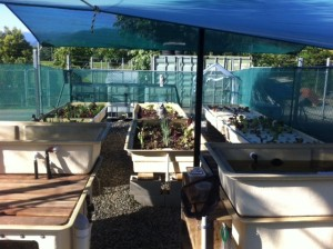 Aquaponics in Education