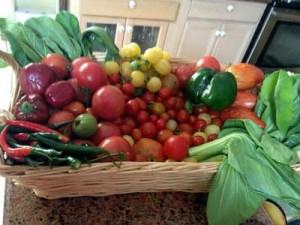 Aquaponic vegetables taken from Sahib's garden
