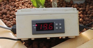 Digital thermometer in an Aquaponics system