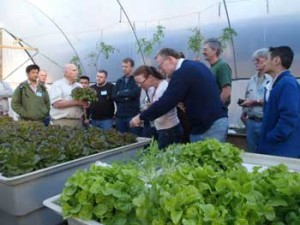 Aquaponic grown lettuce - better than organic. Students examine these prime quality, chemical free lettuce.