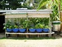 Aquaponics in Cooroy Queensland