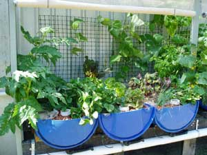 Aquaponics in Cooroy